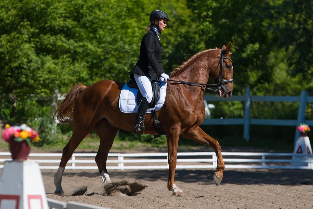 XV Интеграционные конные игры