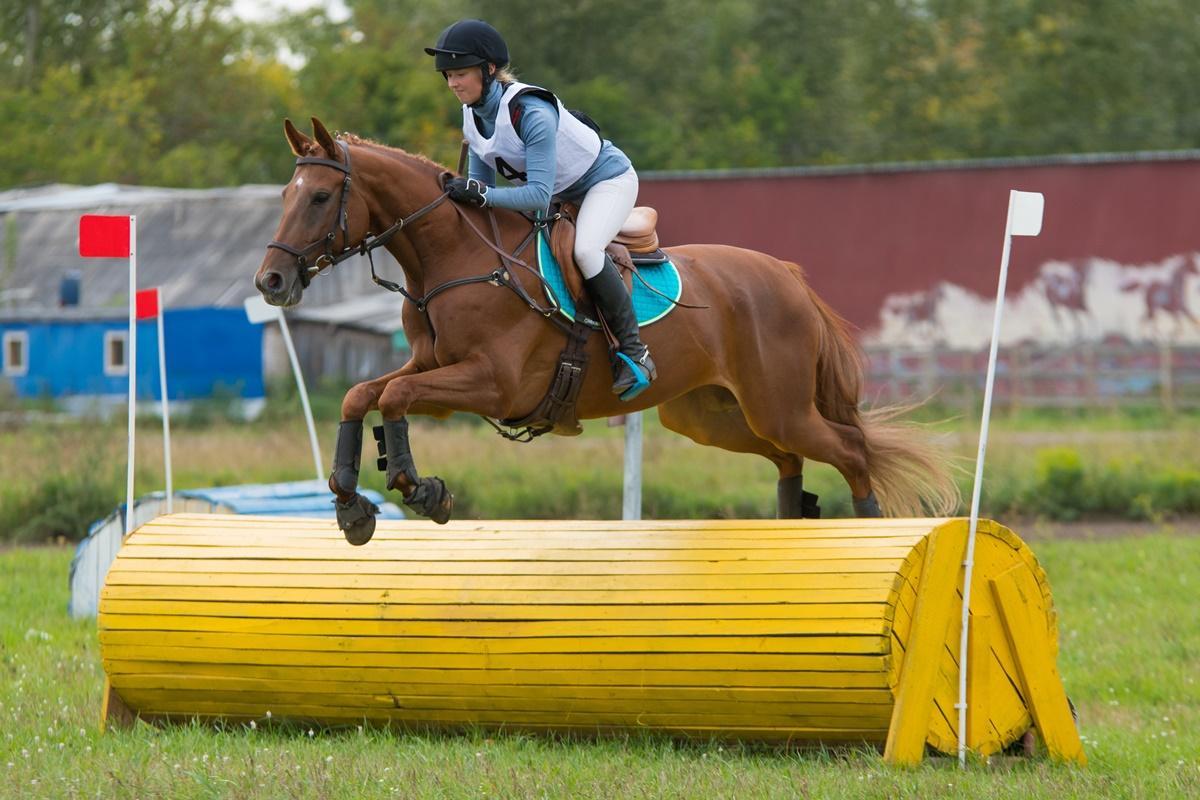 Кубок НСО по троеборью (конный спорт)