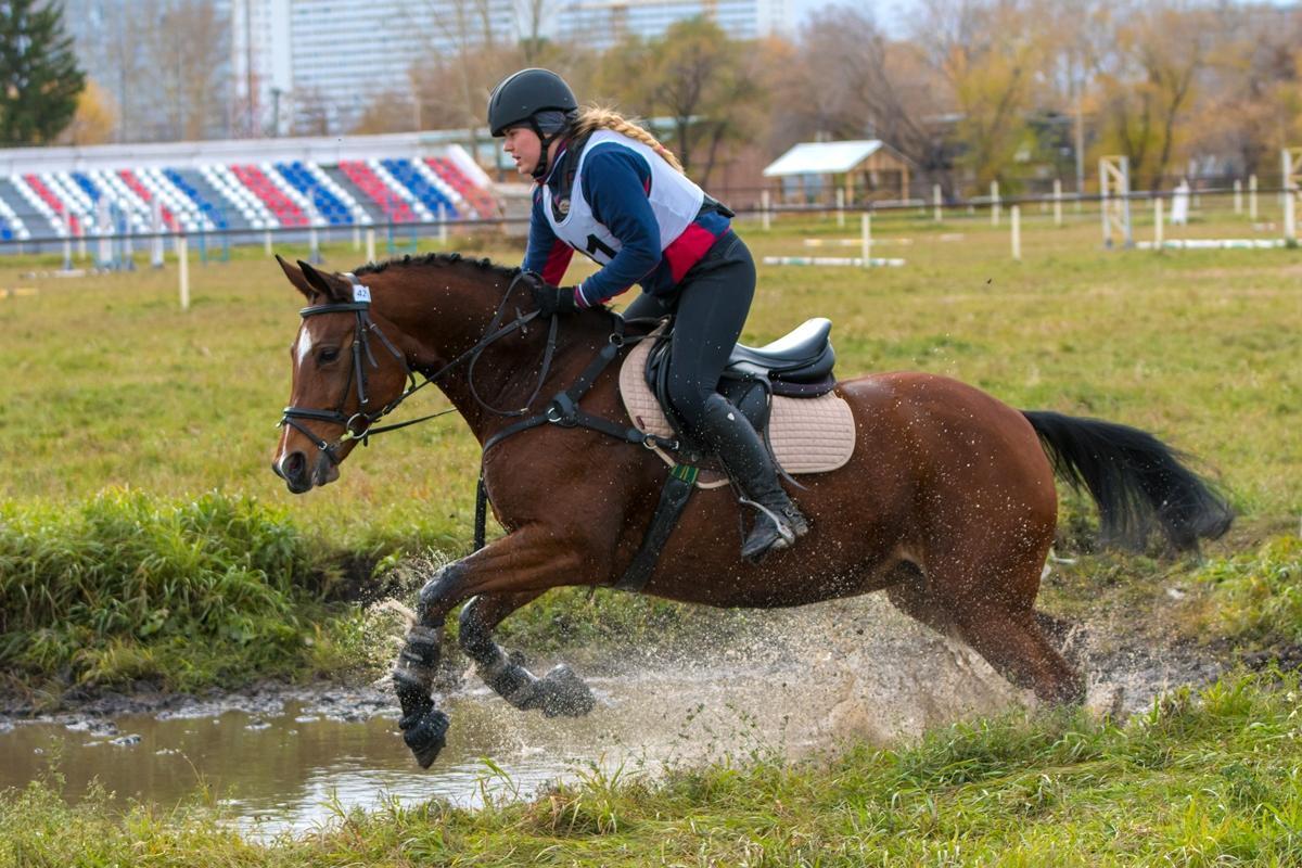 Чемпионат СФО по троеборью (конный спорт)